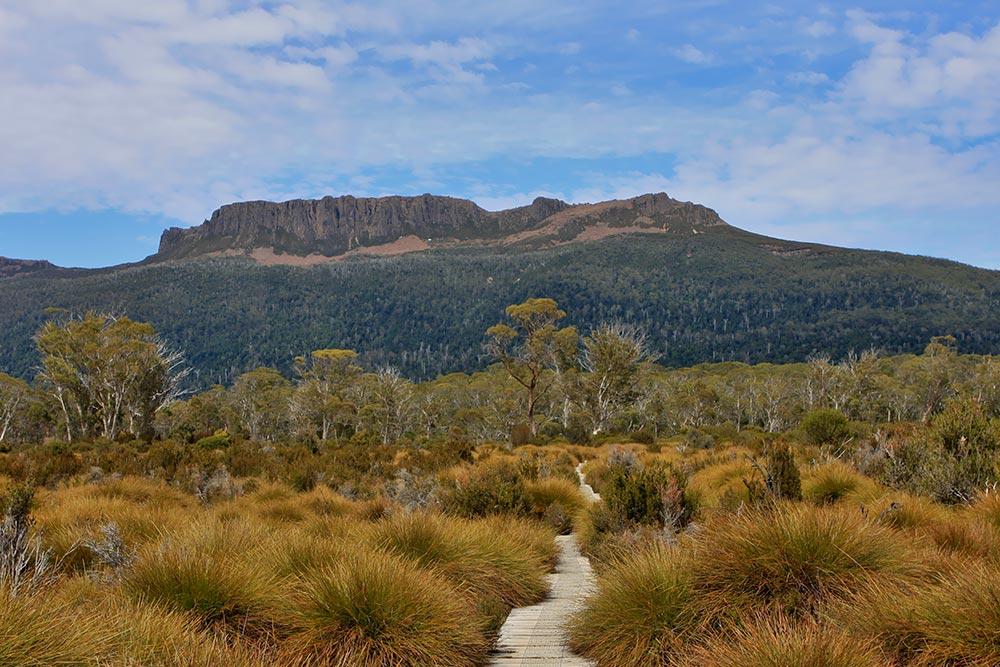 Eucalyptus_forest_and_button_grassland.jpg