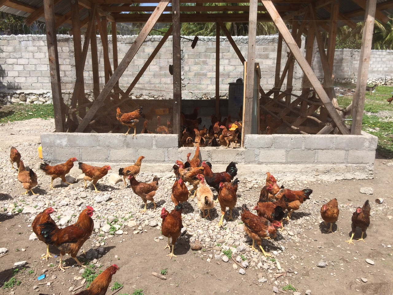 A chicken house for broiler hens at an Orphanage in Les Cayes, Haiti.