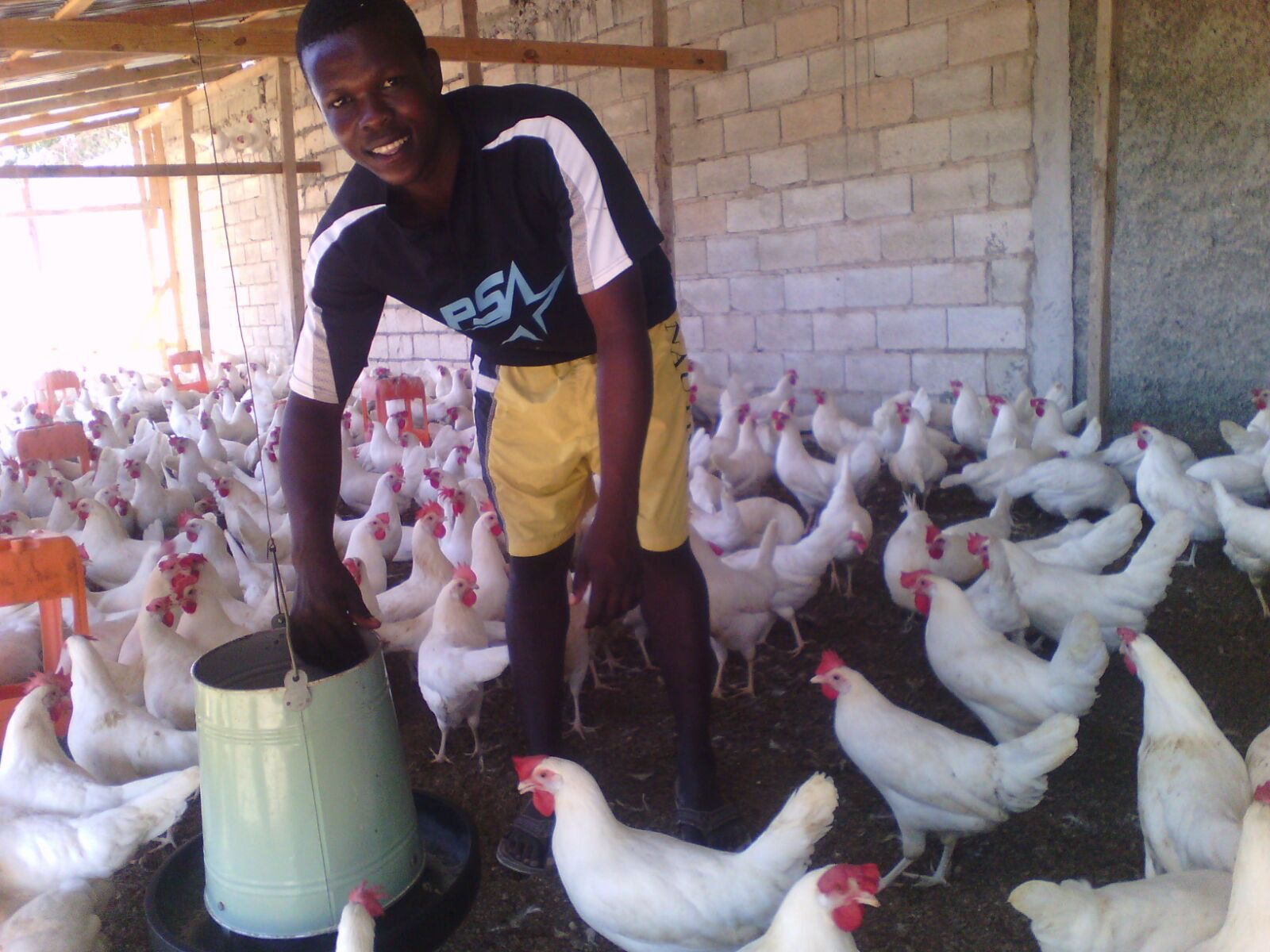 A project staff employee at one of our community projects in Jacmel, Haiti, that has over 1000 laying hens.