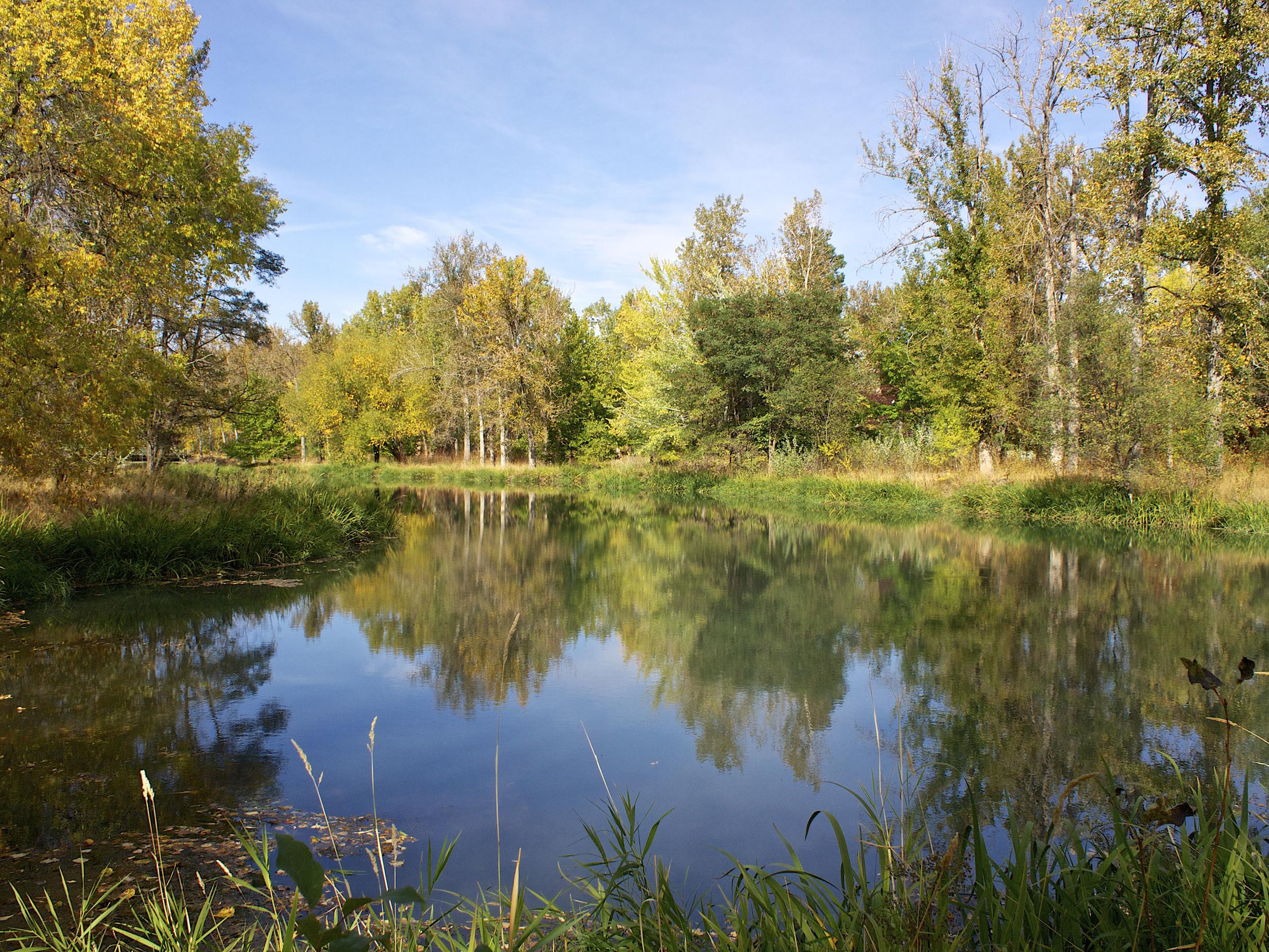 Eschbach pond looking North, Oct. 2013, r9122610.jpg