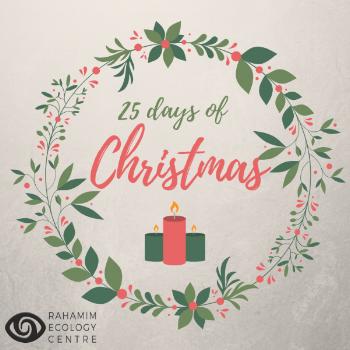 Rahamim's 25 days of Christmas.png