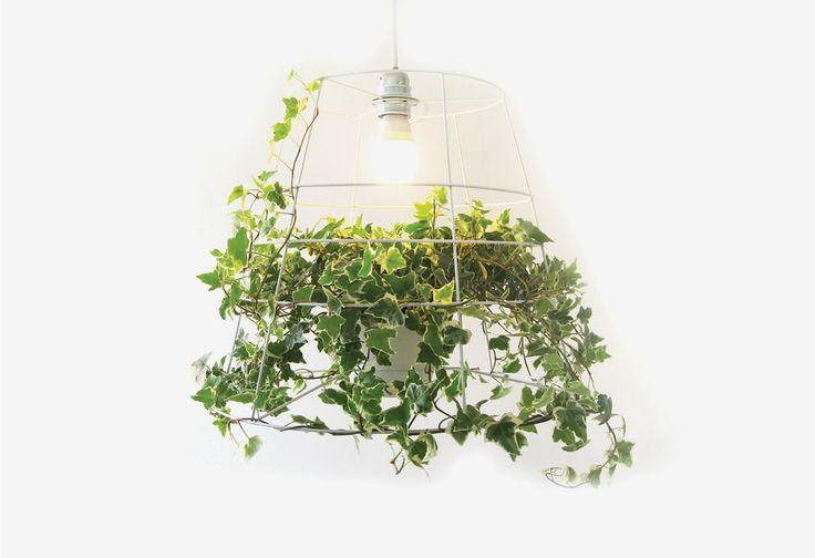 photosynthesislight.jpg