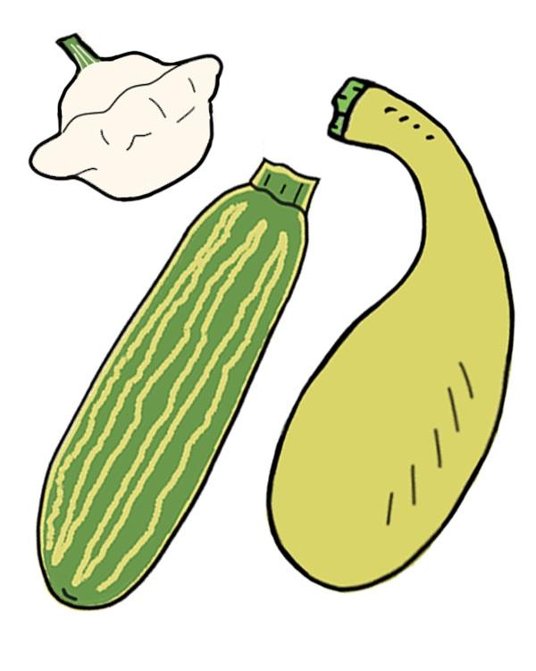 Zucchini + Summer Squash