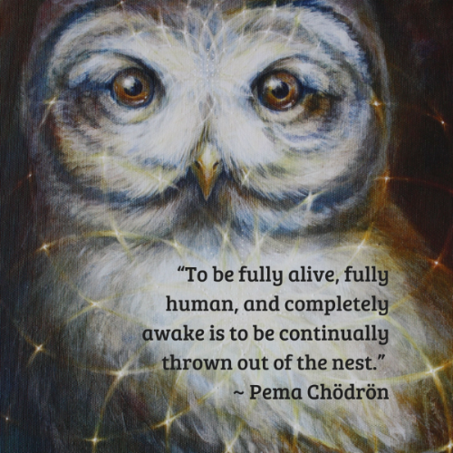 Pema Quote with Owl.png