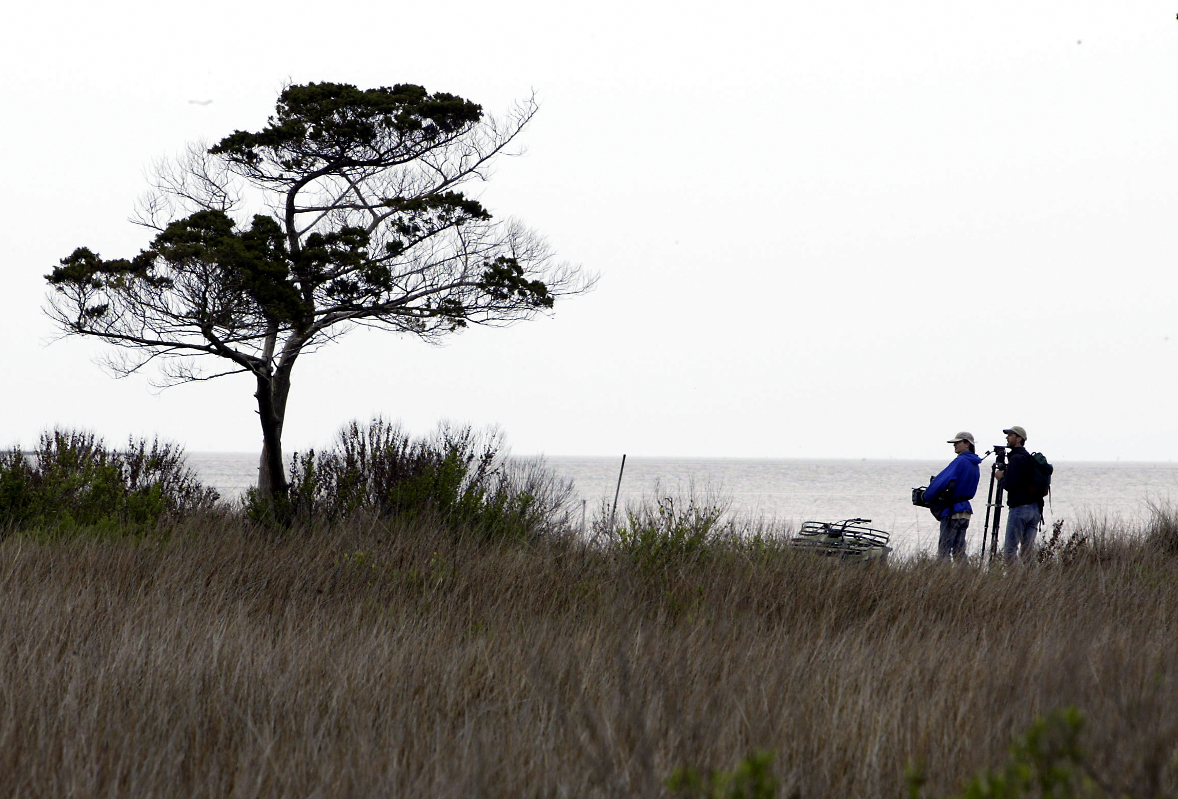 Portsmouth Island tree