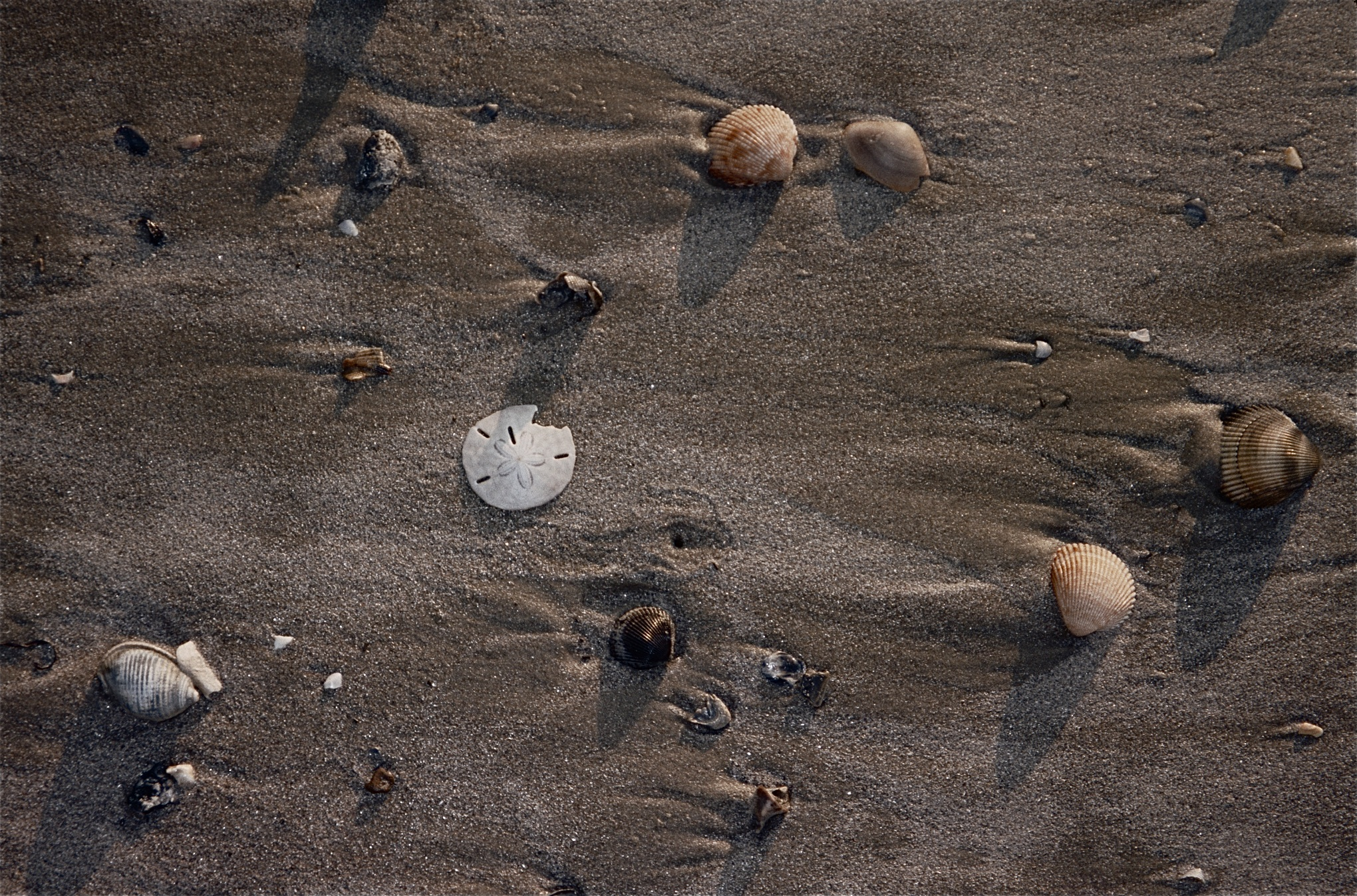 Shells in sand