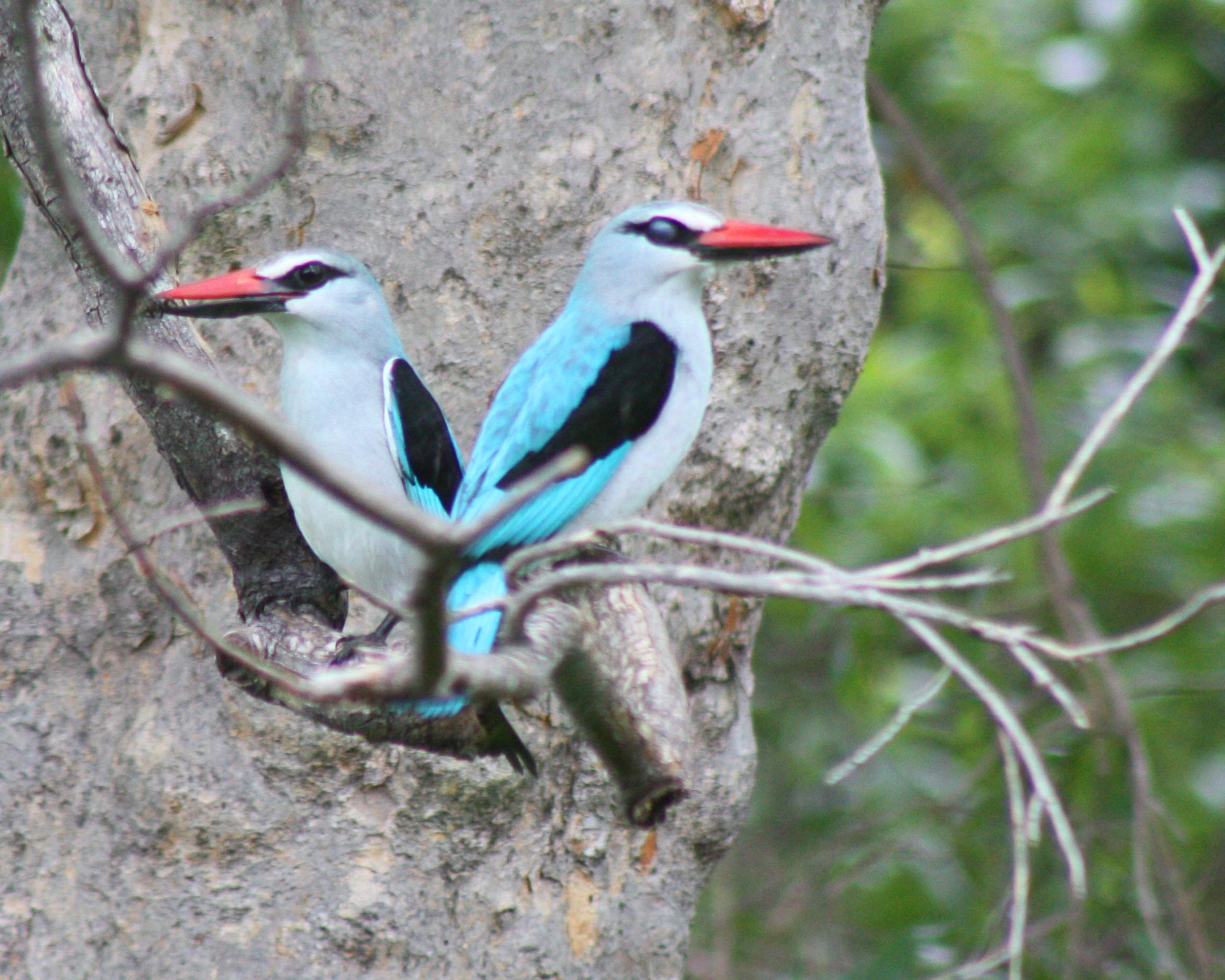 wonderful birding
