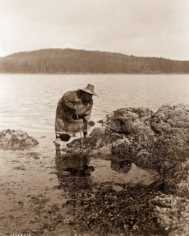 A Kwakiutl gatherer hunts abalones in Washington , 1910.    ©EDWARD S. CURTIS/LIBRARY OF CONGRESS