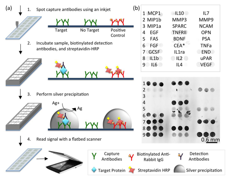 47.  Zhou G., Bergeron S., and Juncker D.,  High Performance Low-Cost Antibody Microarrays Using Enzyme Mediated Silver Amplification  ,Journal of Proteome Research,14, 1872–1879 (2015).   PDF  |  SI