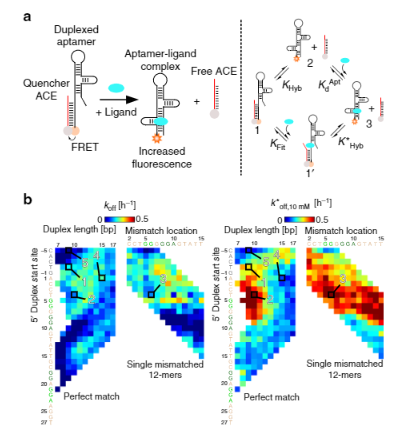 70.  J. D. Munzar, A. Ng, and D.Juncker,  Comprehensive profiling of the ligand binding landscapes of duplexed aptamer families reveals widespread induced fit  , Nature Communications, 9, 343 (2018).   PDF  |  SI