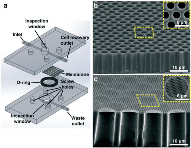 75.  J.A. Hernández-Castro, K. Li, J. Daoud, D. Juncker, and T. Veres,   Two-level submicron high porosity membranes (2LHPM) for the capture and release of white blood cells (WBCs)  , Lab on a Chip, 19, 589-597 (2019).    PDF    |    SI