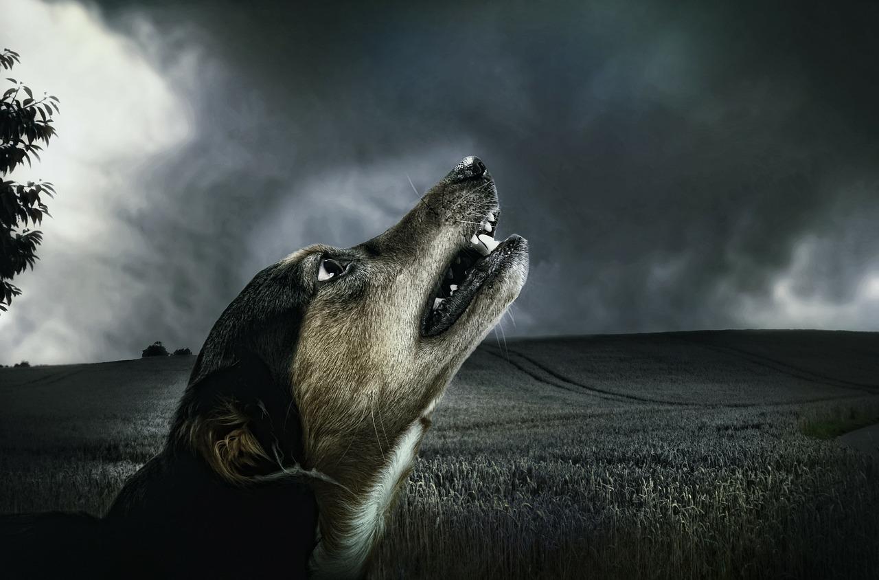 dog-183288_1280.jpg