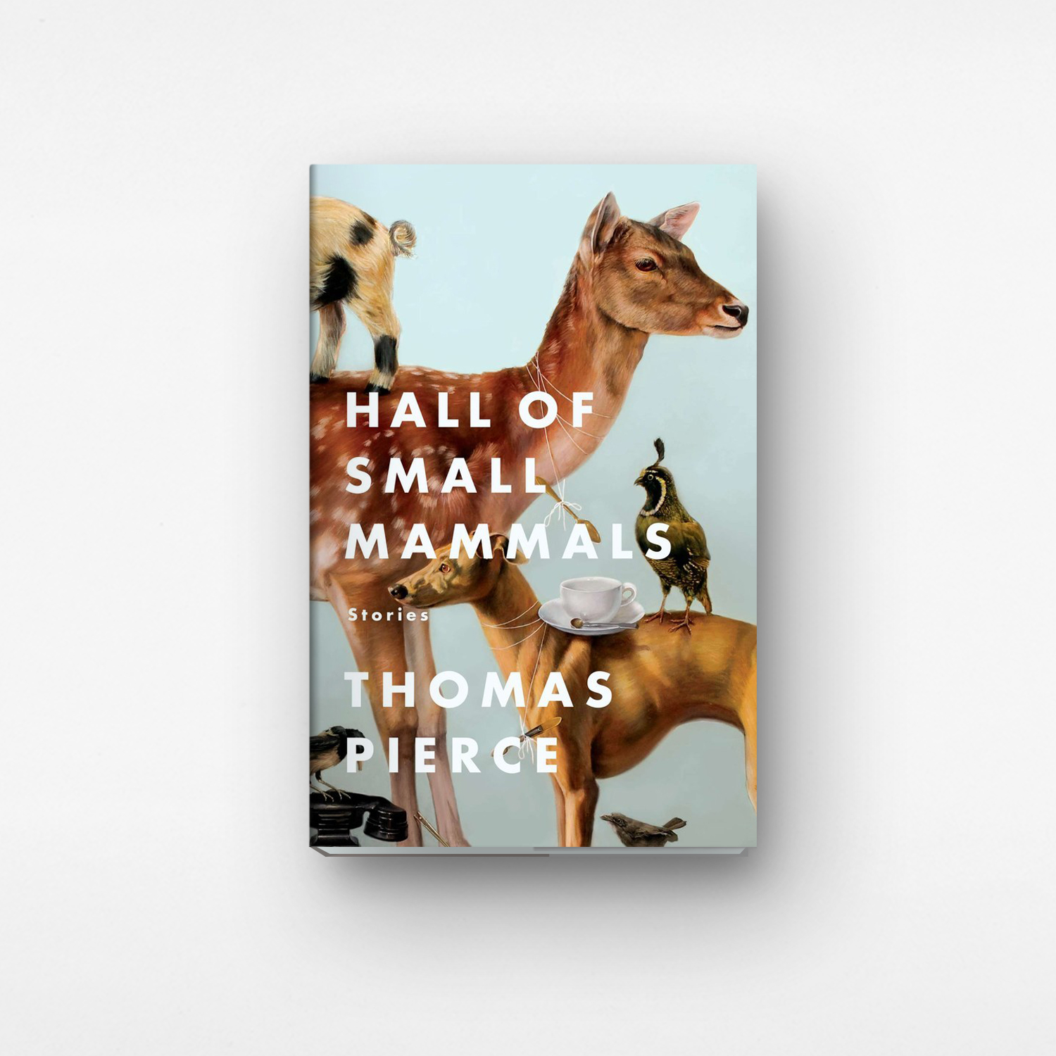 Hall Of Small Mammals designed by Grace Han