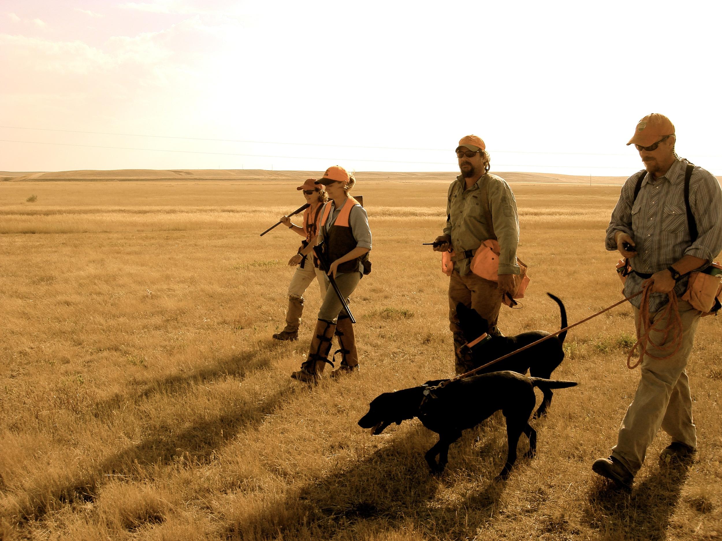 montana sharptail hunt