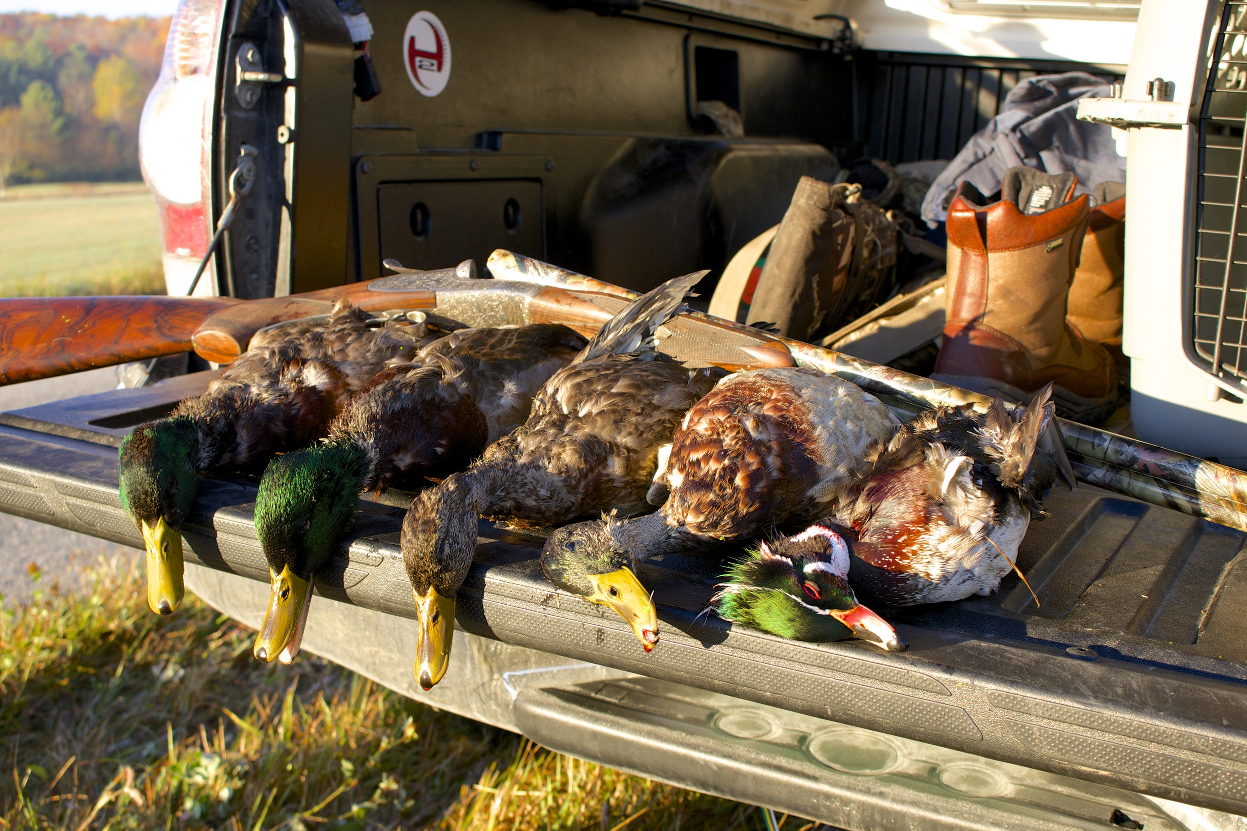 first duck hunt in new england