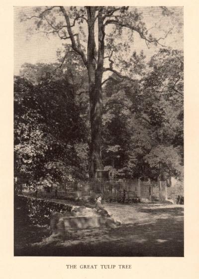 The Great Tulip Tree, circa 1920, from  Inwood Hill Park , Reginald Pelham Bolton