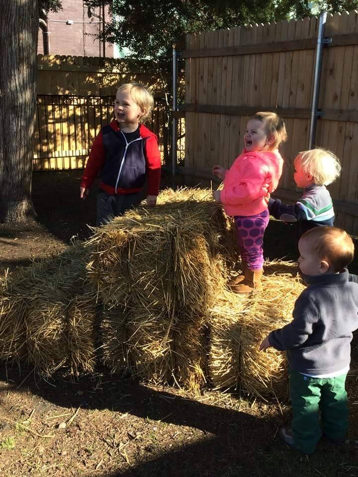 toddler hay.jpg