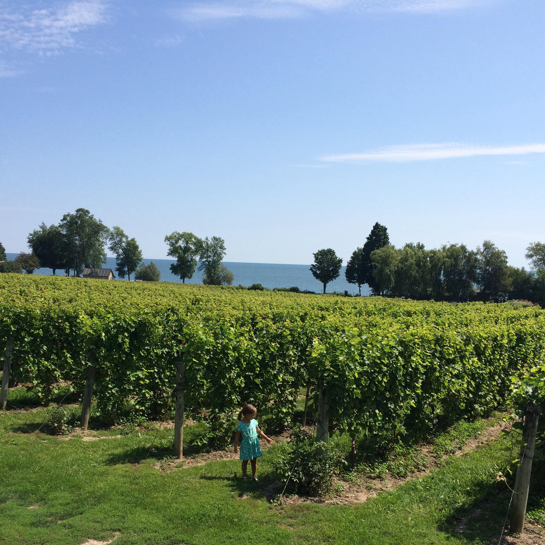 Idyllic vineyards on Lake Ontario at Waupoos Winery