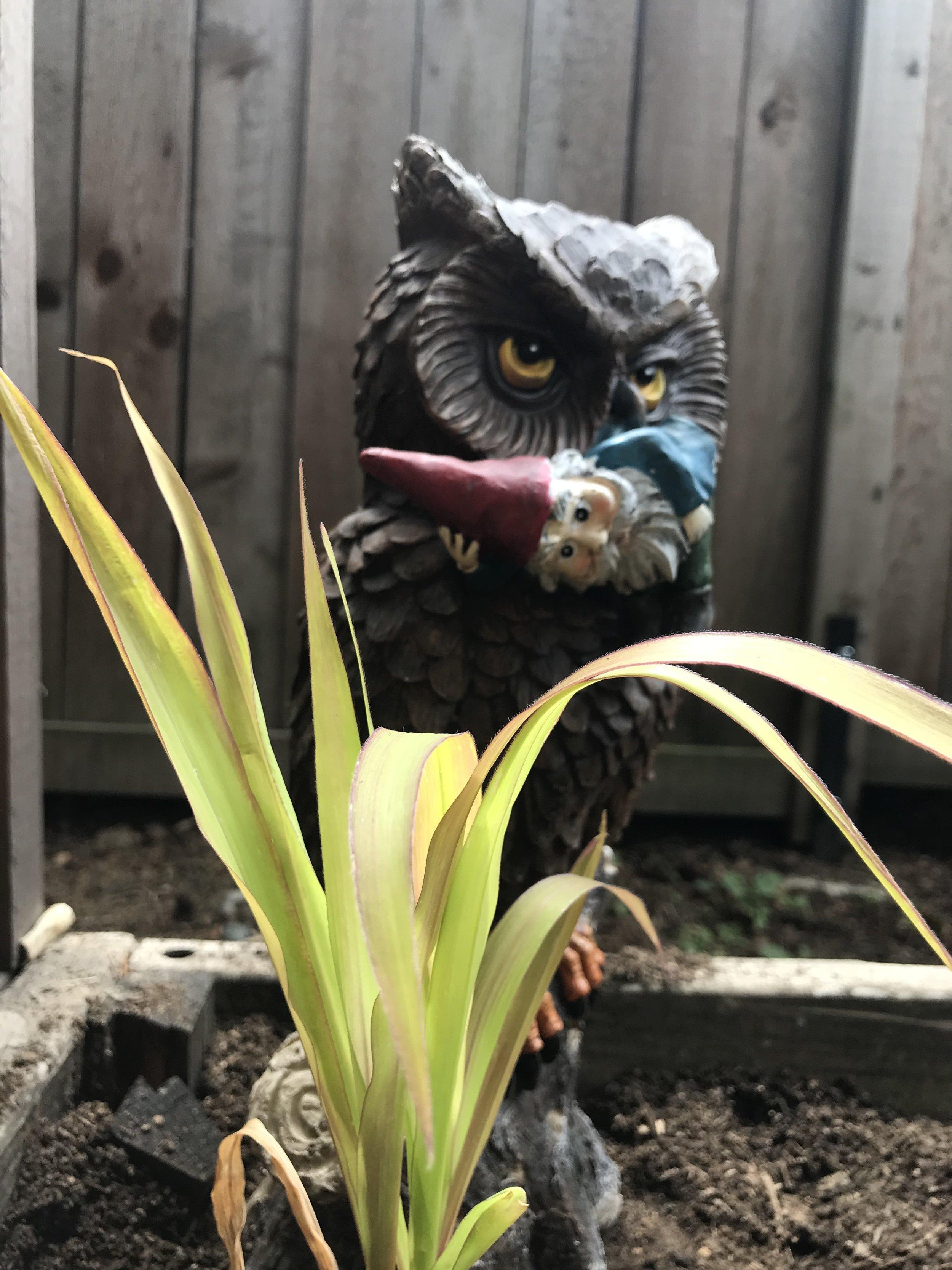 Corn 'N Owl - My favorite tiki drink.
