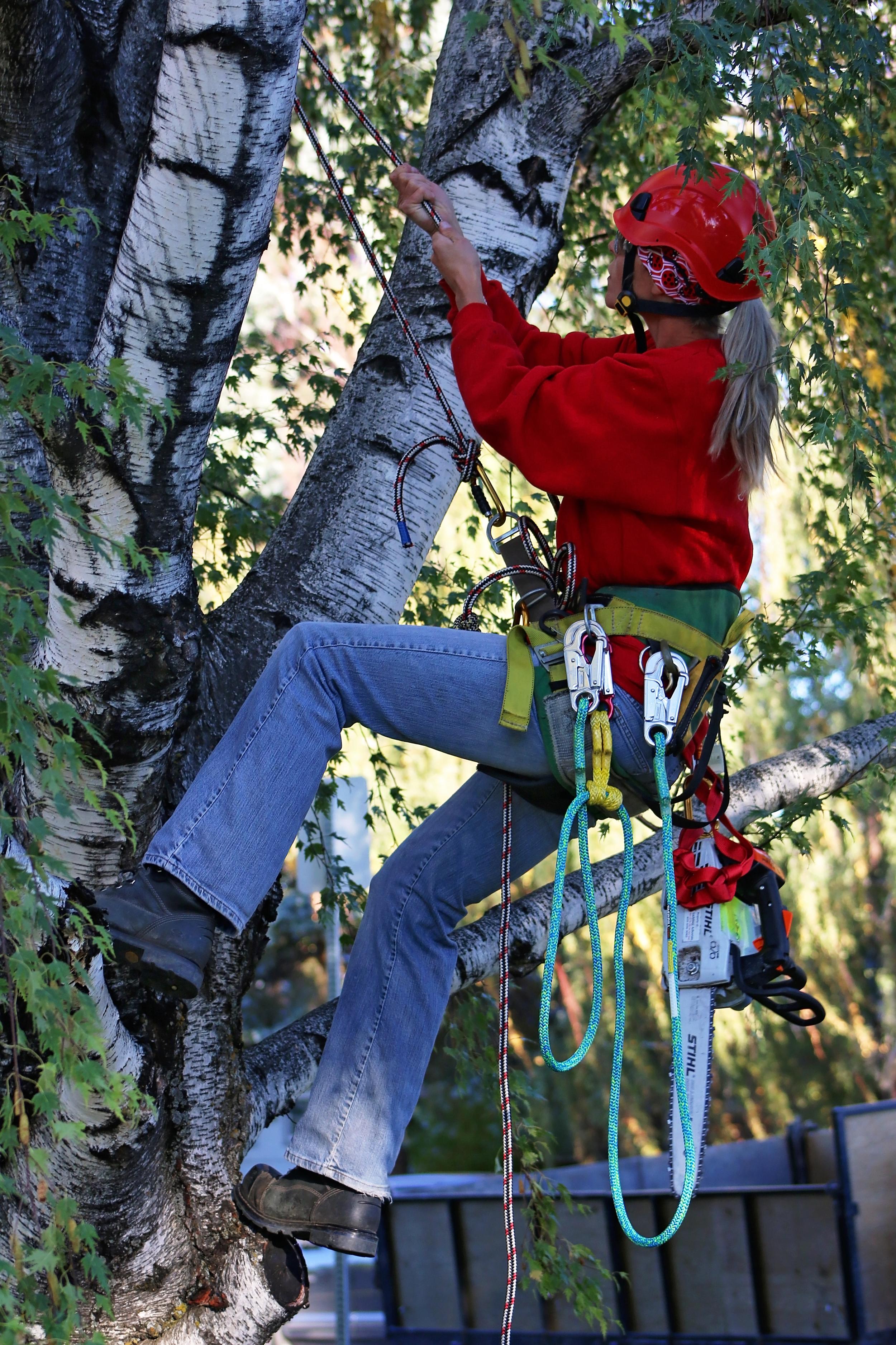 Ladybug_Arborists_26.jpg