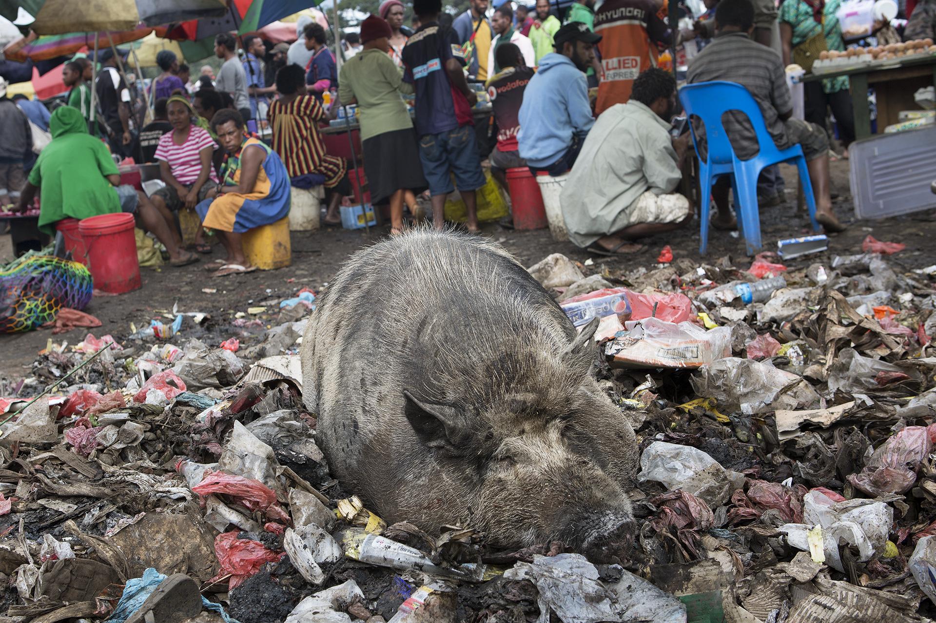 pig-market.jpg