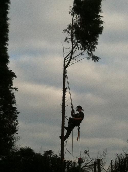Safe tree felling