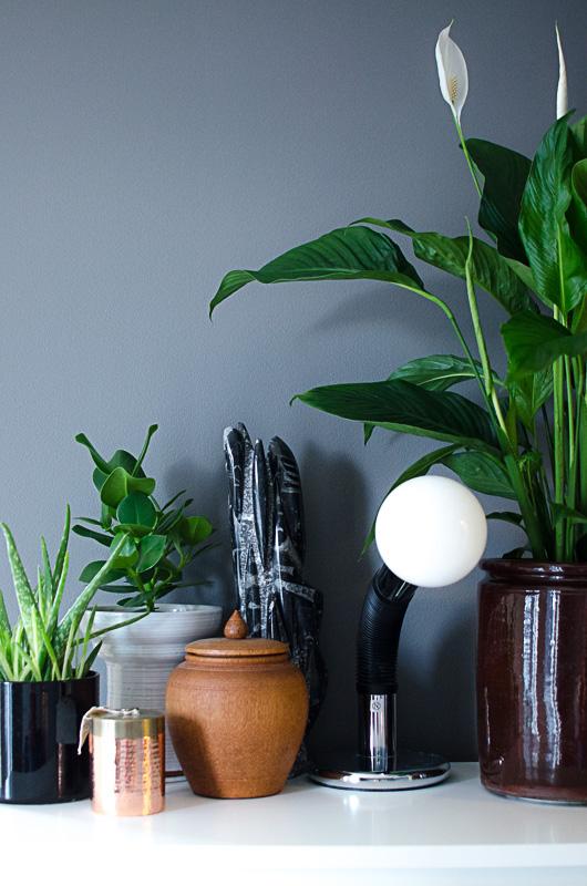 Fredslilje (t.h.) er et vakkert navn på en plante. Husk på at mørke vegger reflekterer mindre lys, så sørg for at rommet er lyst nok til planter.