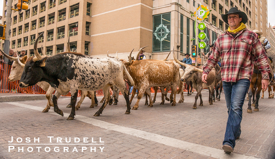Cowboys and longhorns on Houston Street in San Antonio.