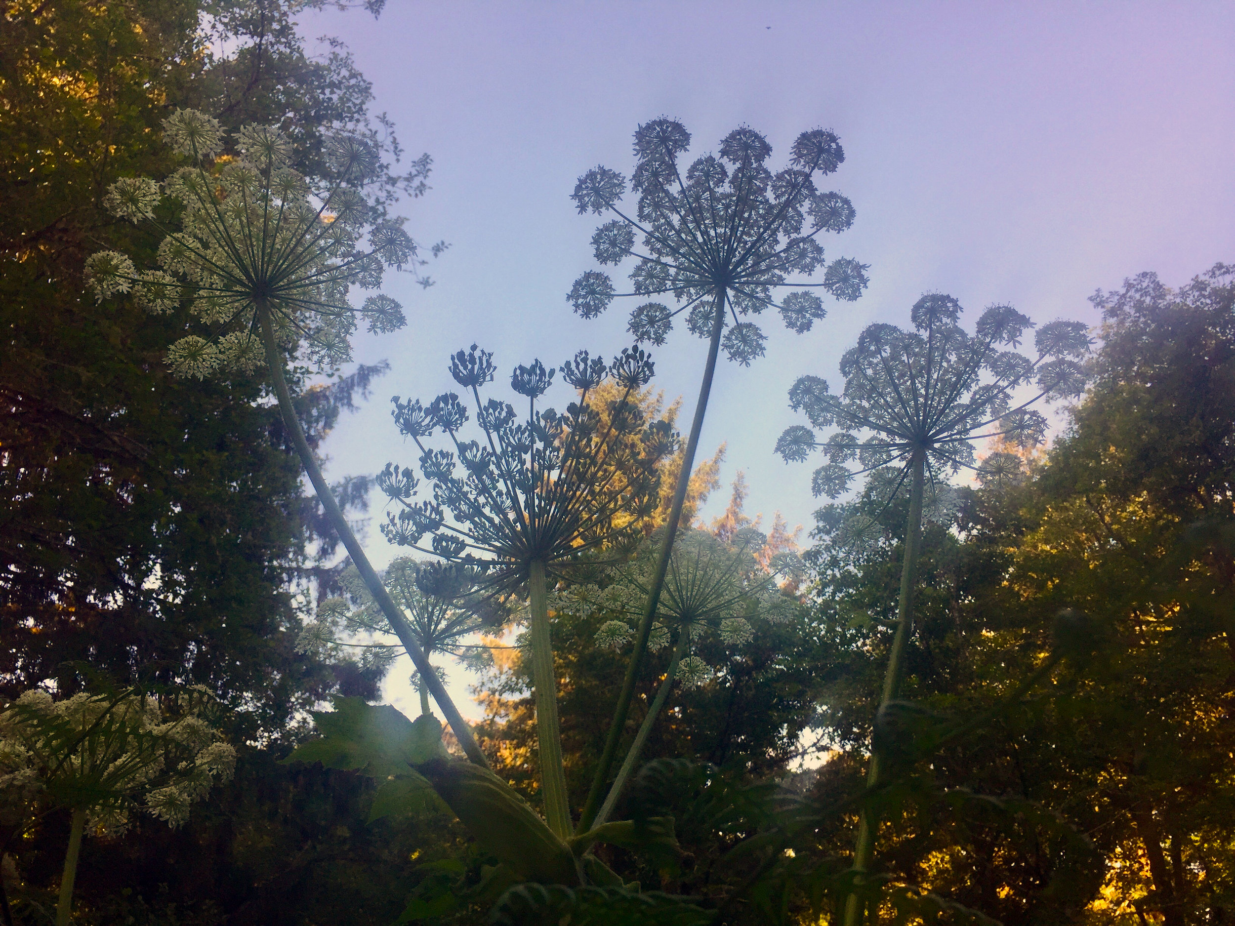 bigflowers.jpg