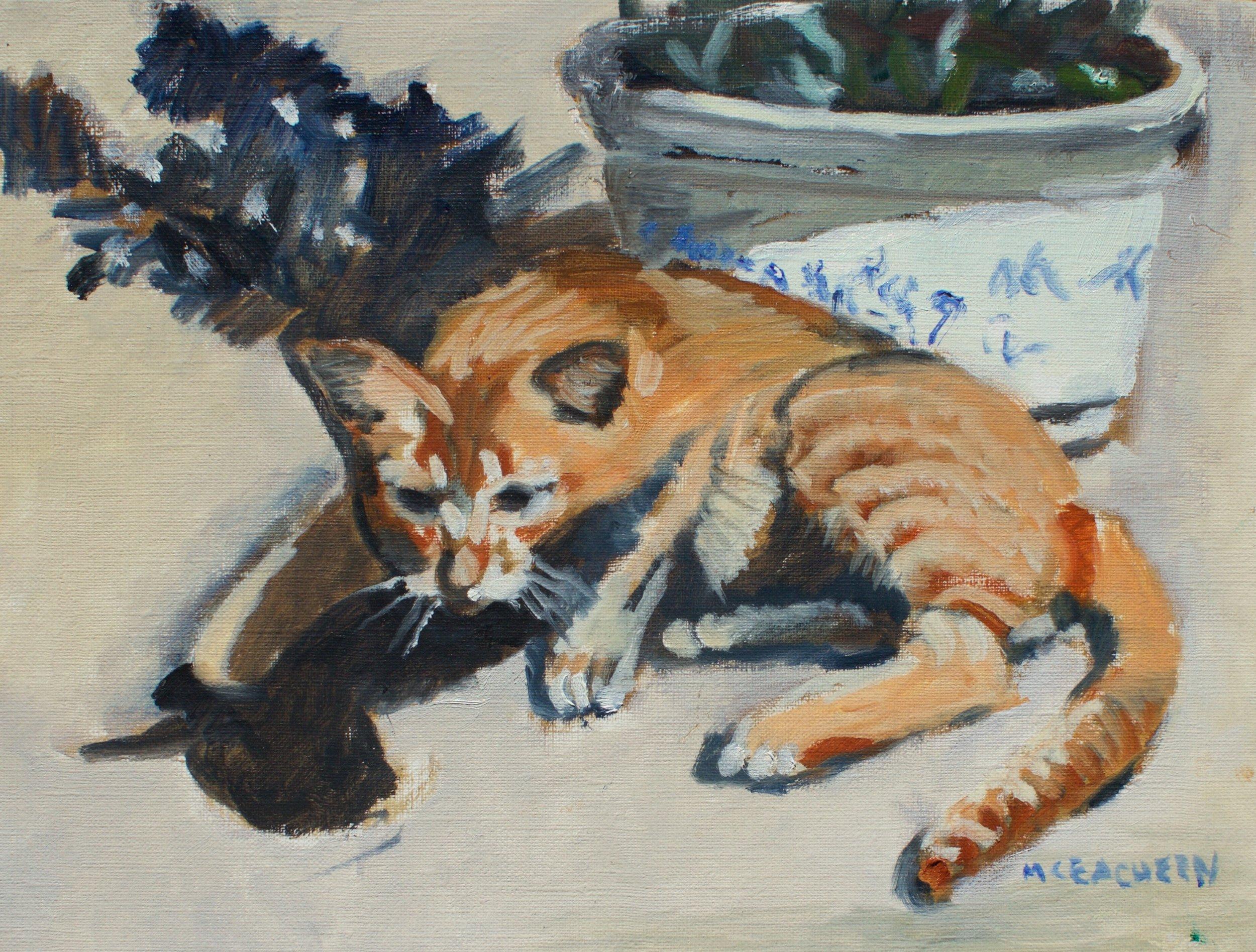 Hội An Kitten