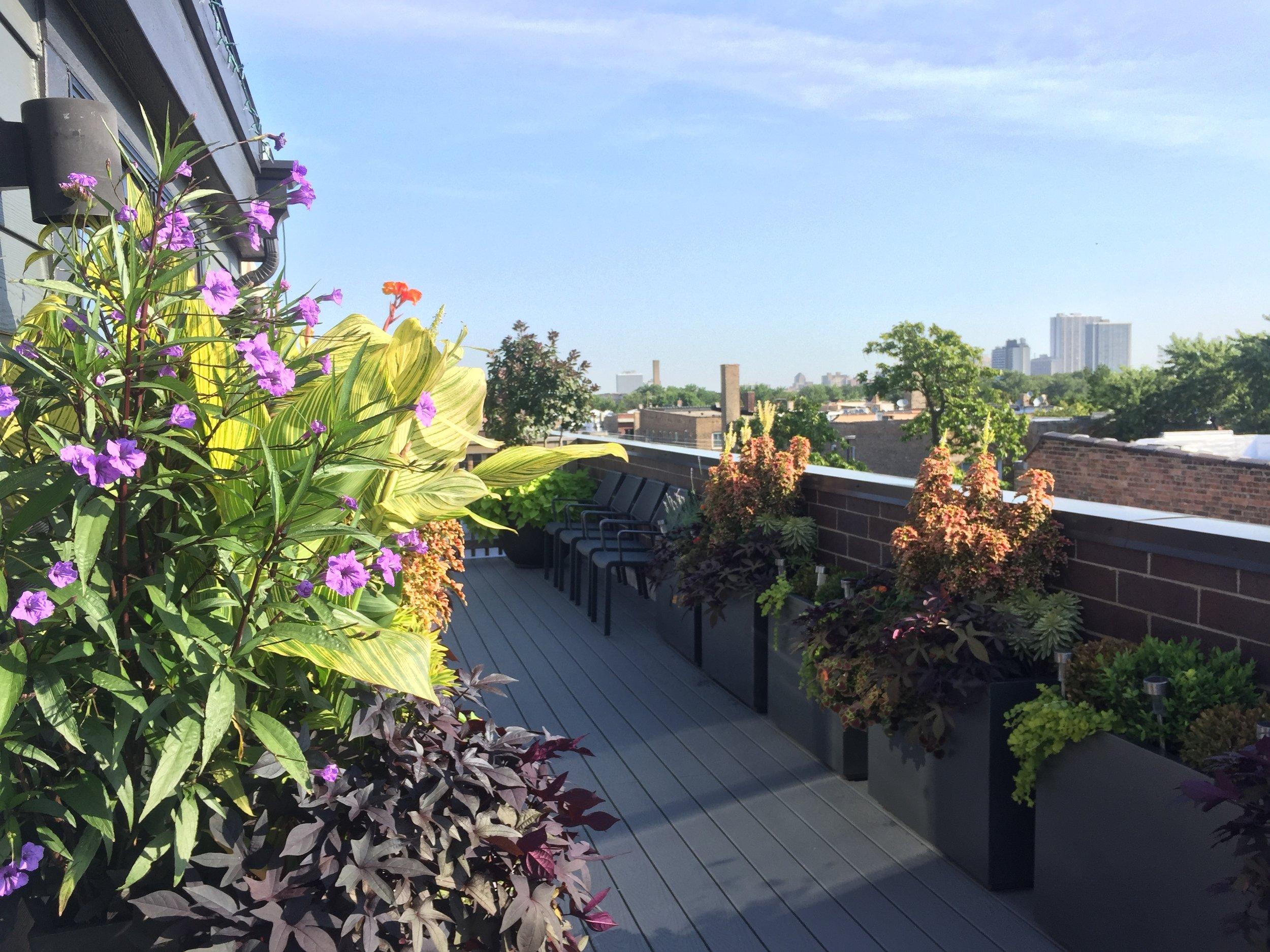 Roof Top Garden in Andersonville