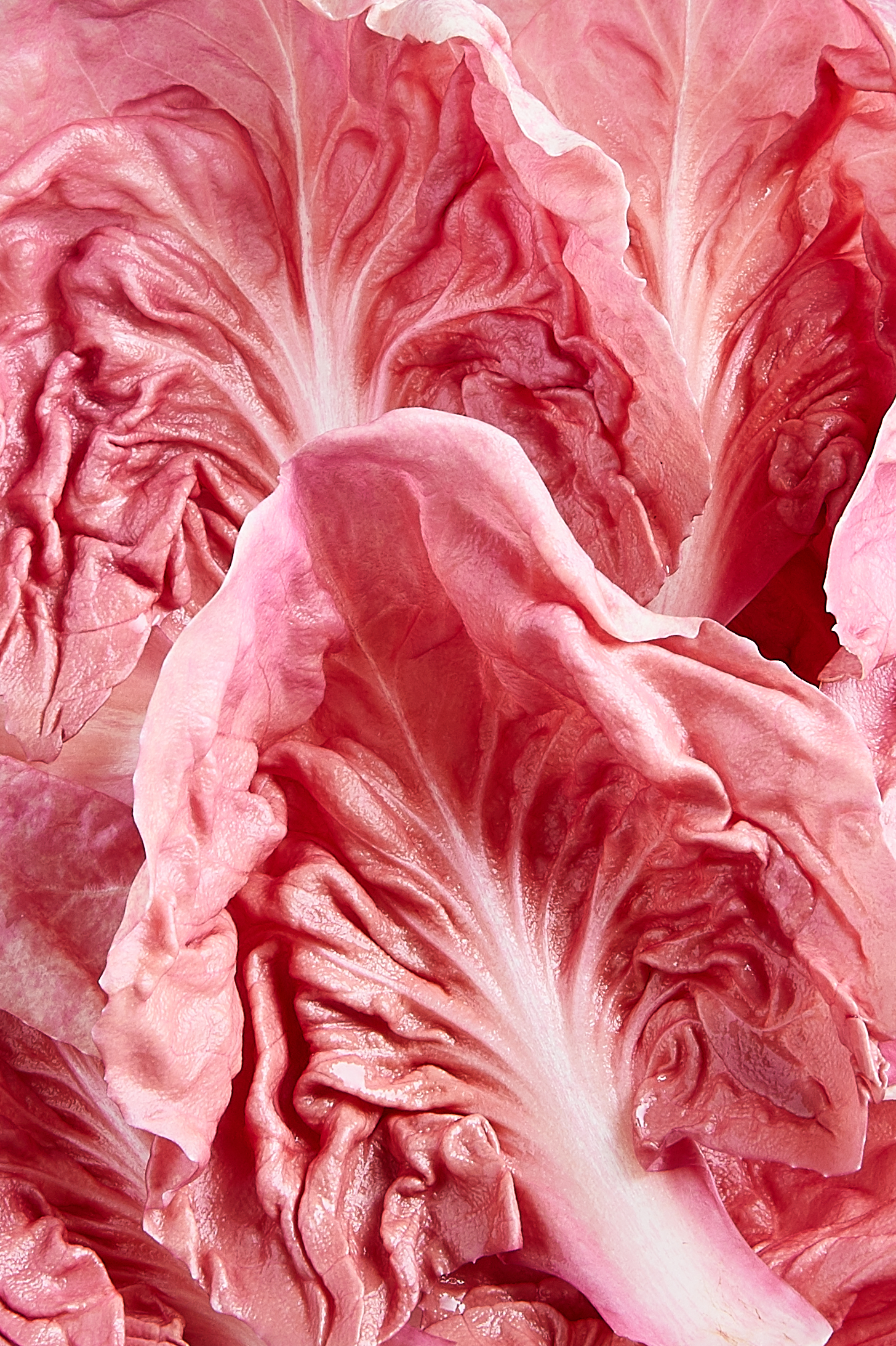 FoodMacros_GIFImages_TaraLiondaris 12.jpg