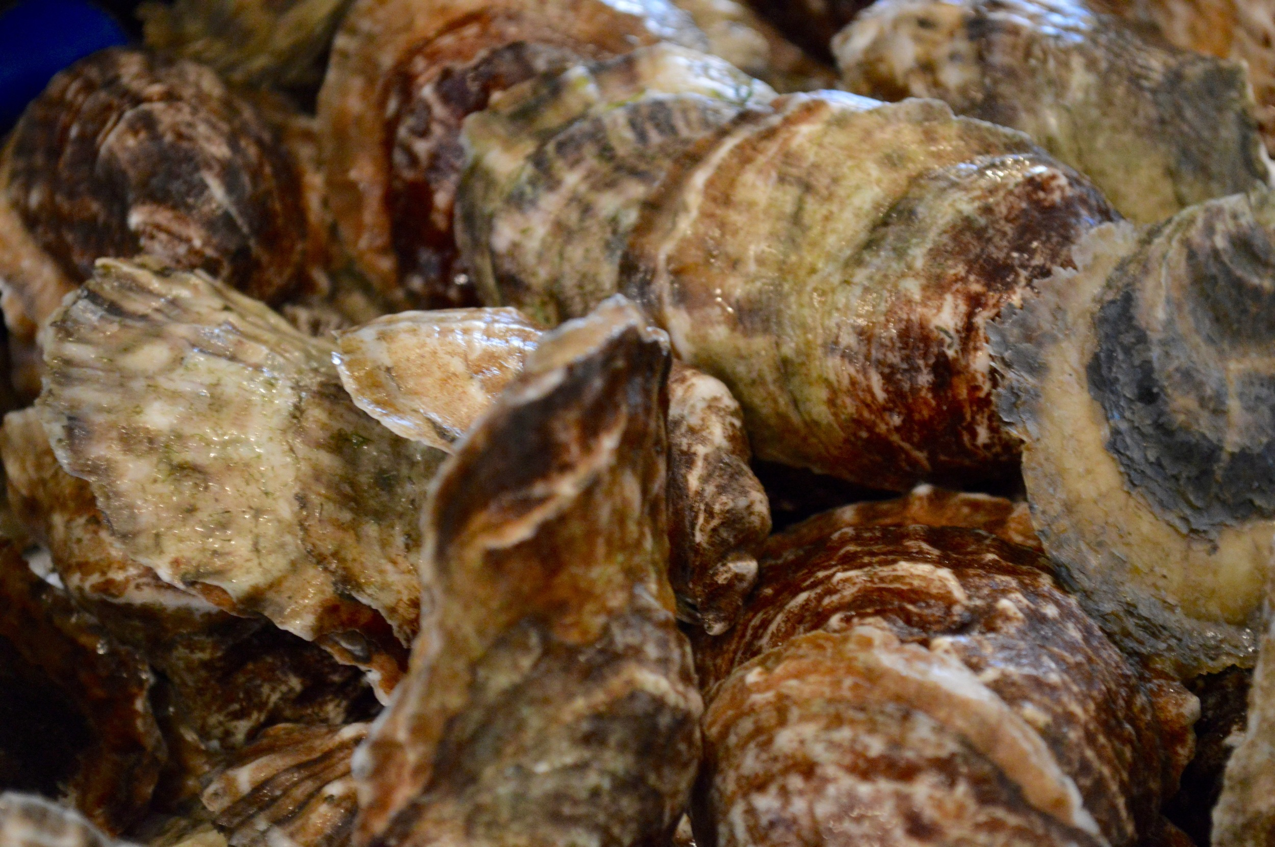 Outstanding oysters from  Hummock Island