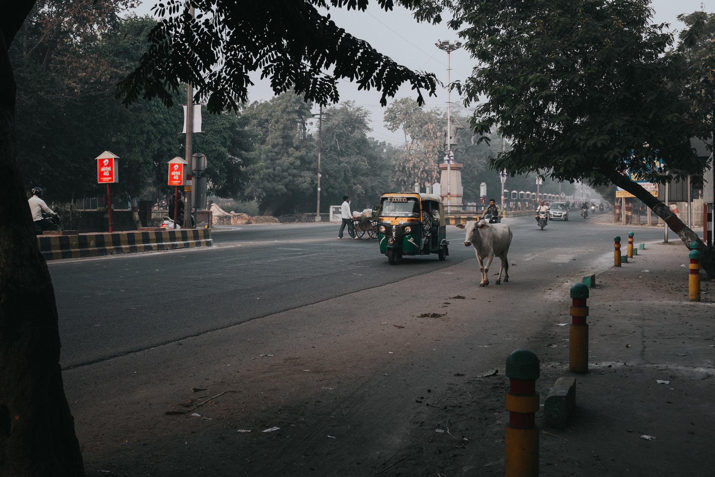 INDI3436.jpg