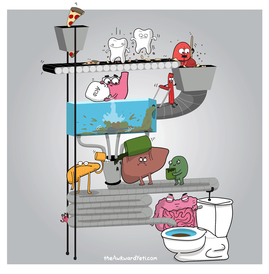 Digestion-Animation-1.png
