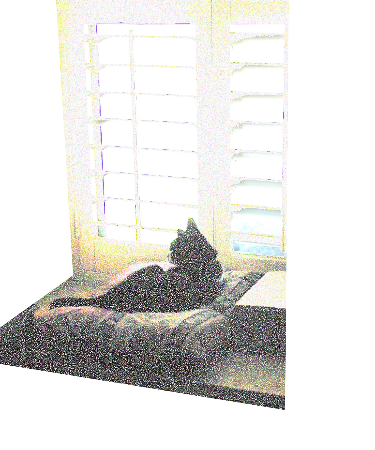 Chipper in Window, 2008  Digital Painting