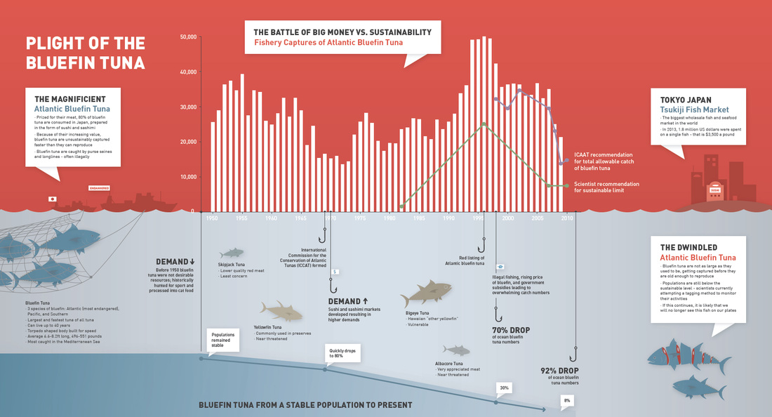 Plight of the Bluefin Tuna information poster, 2014