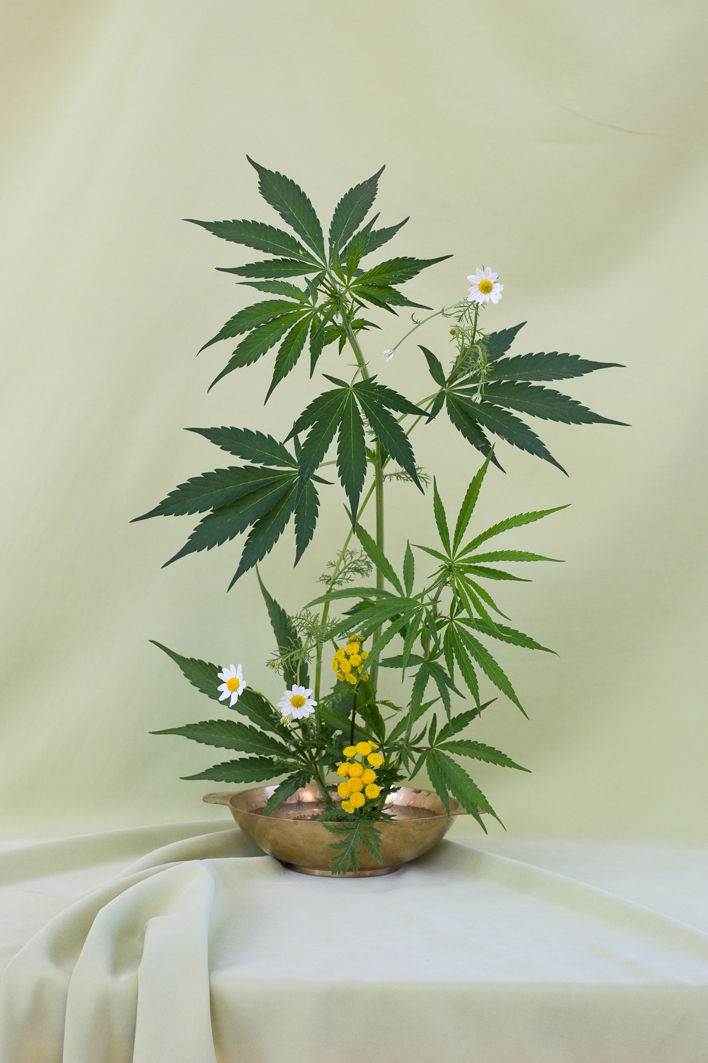 Broccoli_SeekingArrangement_01_PhotobyAnjaCharbonneau_FloralDesignByAmyMerrick.jpg