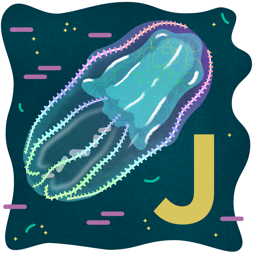 J.png