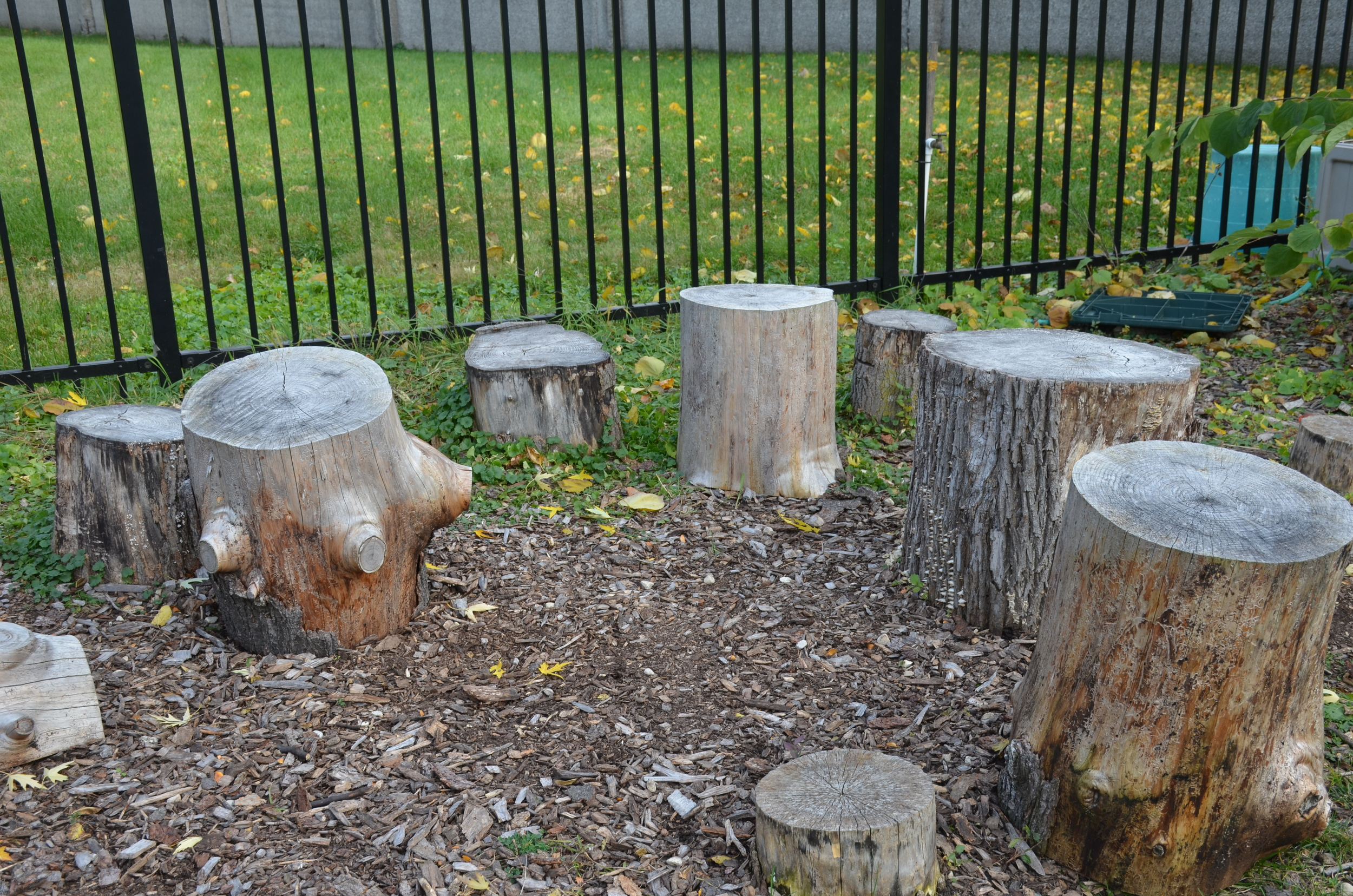 """""""Stump Jump"""" in the BCO Greenspace"""