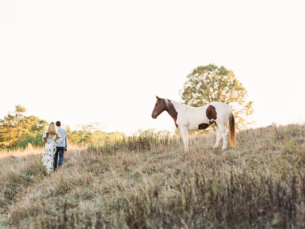 field horses fall north georgia wedding photographer