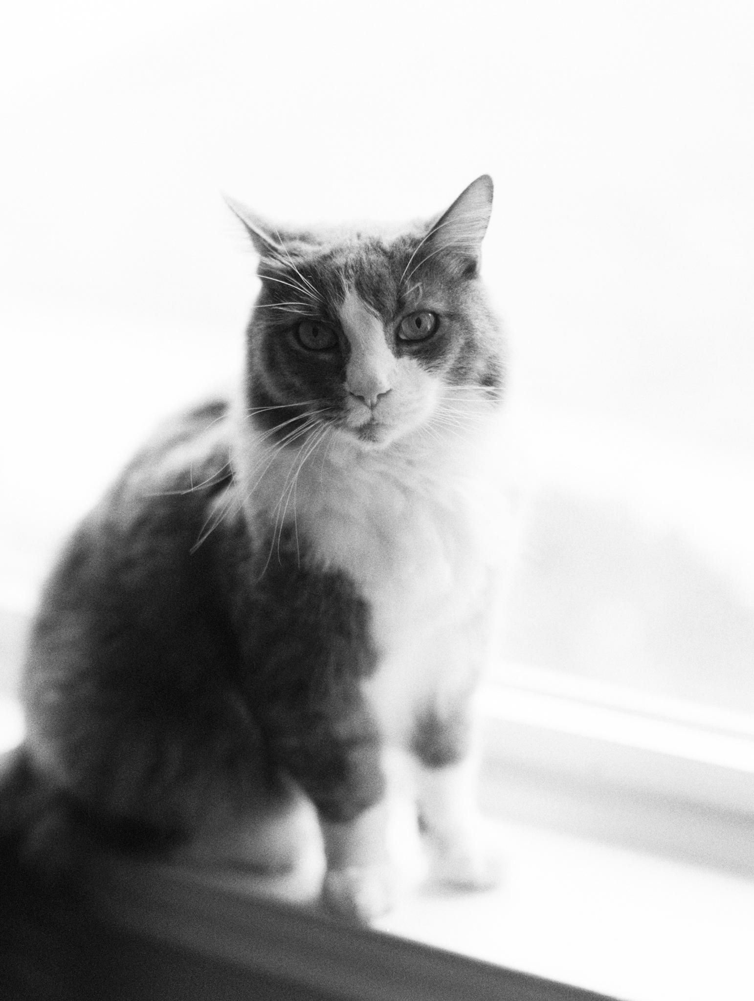 My sweet little fur boyfriend | Shot on Ilford B+W film