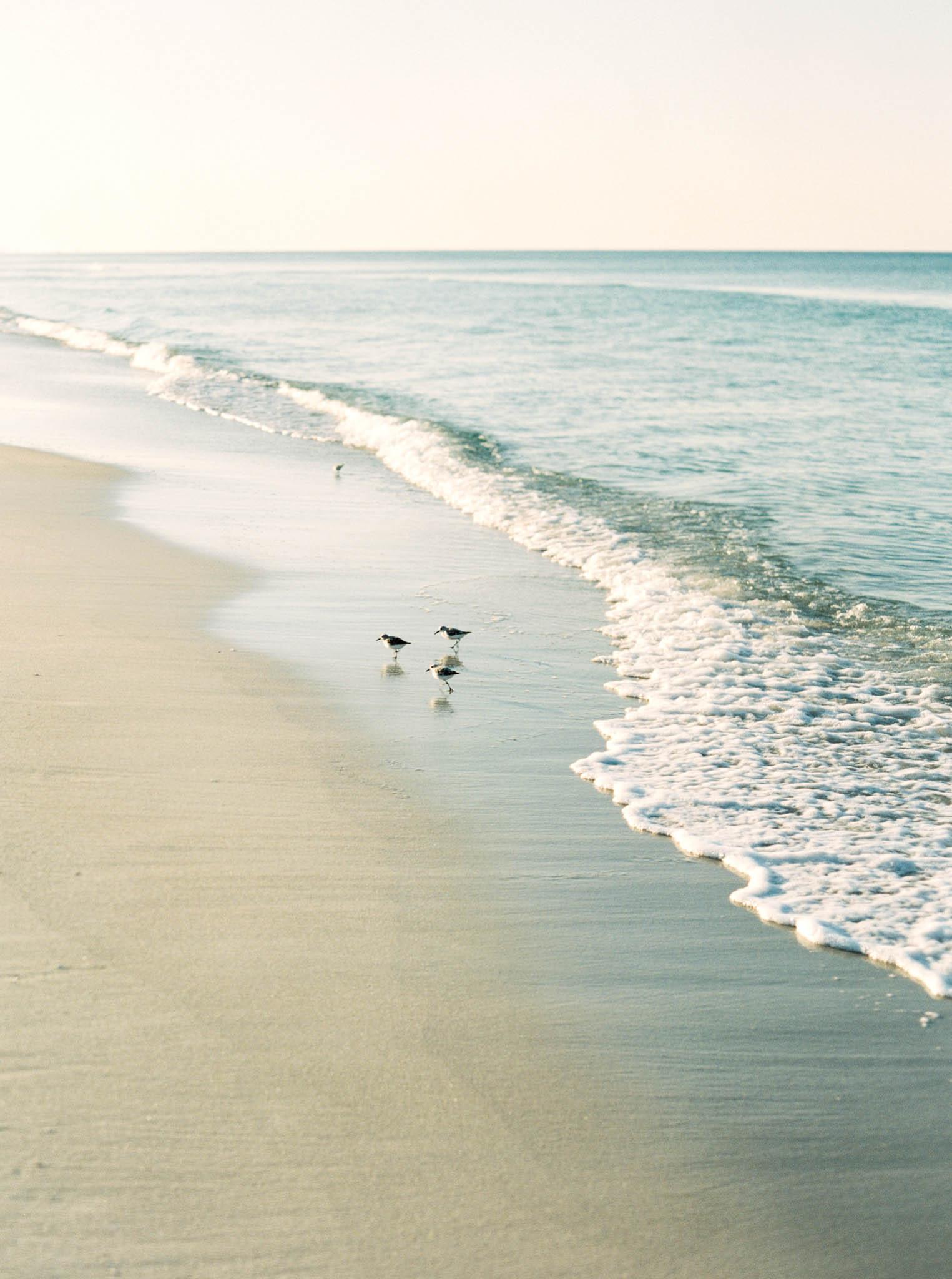 Rosemary shoreline | Shot on Fuji 400 film
