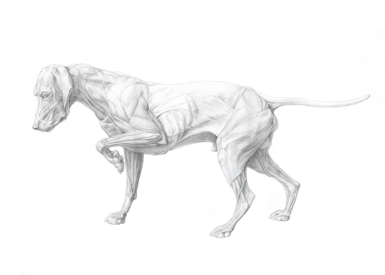 dogcomp.jpg