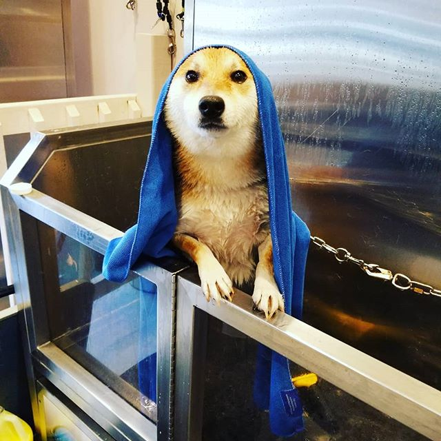 $3 Tuesday for the  2 first guests in come to Mia's bathhouse for pets, wash your dog today dont wait until tomorrow.