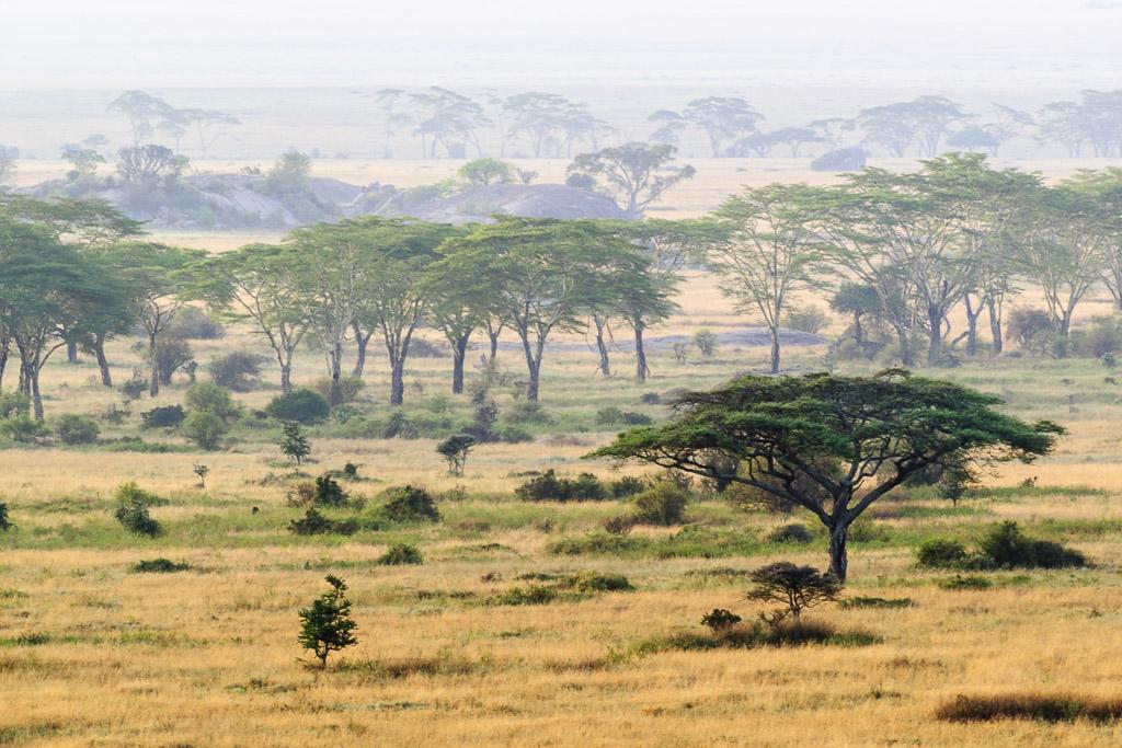 Serengeti Trees Landscape 1.jpg