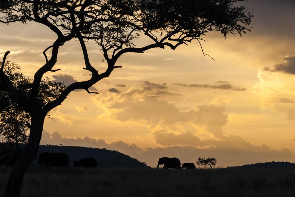 Serengeti Sunset Sky and Elephant Silhouette.jpg