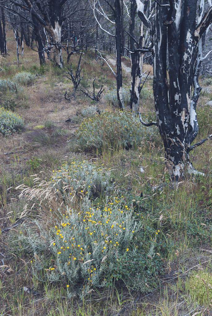 20150214_CMeder_D80_Patagonia-551.jpg
