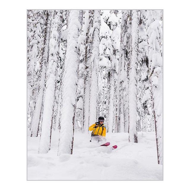 Howling through the trees!  Stevens Pass, WA #powhub #skiing #findingwinter #powderday @stevenspass