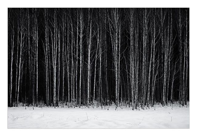 """Aspens along Highway 2, 1/19/2018 . The monochrome, stark winter landscapes have been pulling me this season.  I have driven past this stand of trees en route to Leavenworth too many times and thought """"someday I'll stop and shoot those"""". Thanks to @alasdairturner for the inspiration and motivation to actually stop and make those pictures.  #landscape #monochrome #aspen #trees"""